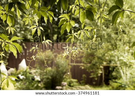 Gardening background with hanging green leaves at the entrance to blooming garden - stock photo