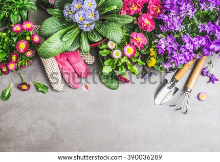 Gardening border with garden tools, gloves ,dirt and various flowers pots on gray stone concrete background, top view, border - stock photo