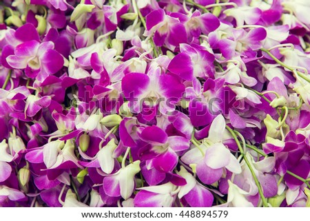 gardening, botany, floristry, texture and flora concept - beautiful orchid flowers - stock photo