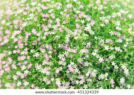 gardening, botany, texture and flora concept - beautiful wildflowers field background - stock photo
