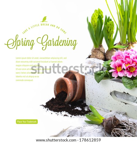 gardening concept/background with fresh flowers and copyspace for your text - stock photo
