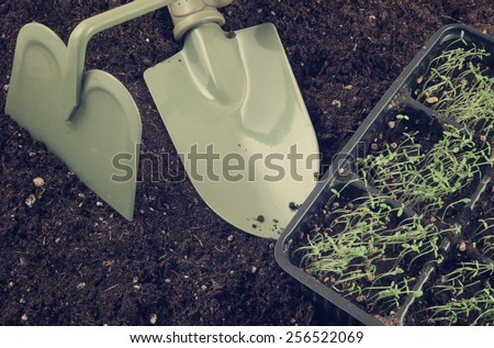 Gardening concept, garden items and young plants - stock photo