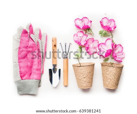 Gardening Concept With Garden Tools, Planting Flowers In Pots And Pink  Gloves On White Background