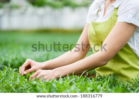 Gardening. Cropped image of woman in apron taking care of plants while standing in greenhouse