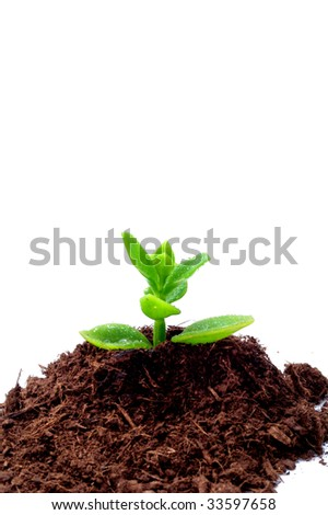 Gardening - Cultivation of a plant, a new idea concept.
