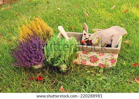 gardening - heather planting - stock photo