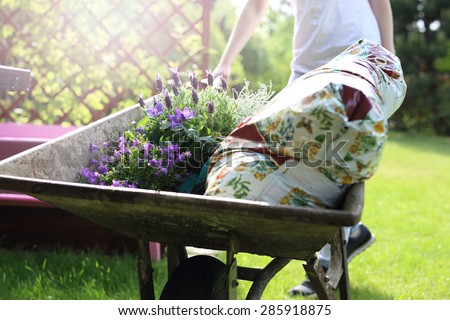 Gardening, hobby and passion.  A woman carrying a wheelbarrow land for planting crops and seedlings  - stock photo