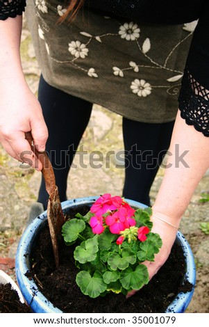 gardening or planting flowers in pot with dirt or soil. hands with trowel plant spring bloom - stock photo