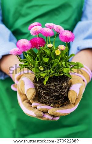 Gardening, Planting flowers - stock photo