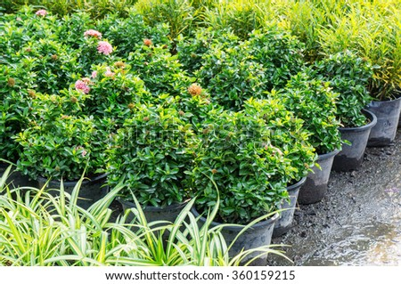 Gardening plants plantlet green nature. - stock photo