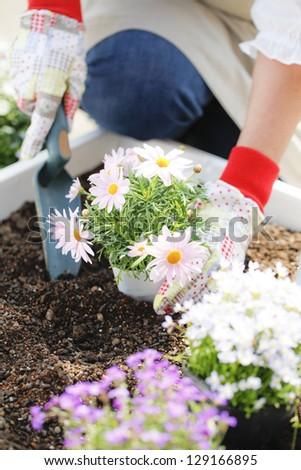 Gardening, seedlings, planting - stock photo