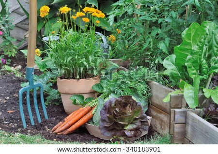 gardening tool in a vegetable garden  with carrots and salad on the ground - stock photo