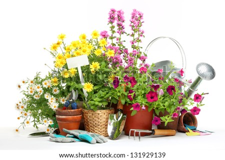 Gardening tools and flowers isolated on white - stock photo