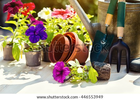 Gardening tools and flowers on the terrace in the garden. Watering can, rubber boots, garden tools, flowers, vases, pots, rubber gloves. Gardening composition. - stock photo