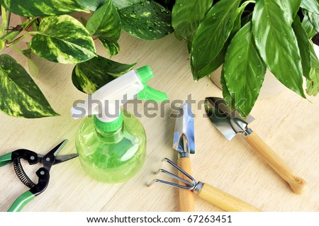 Gardening tools and houseplants - still life - stock photo