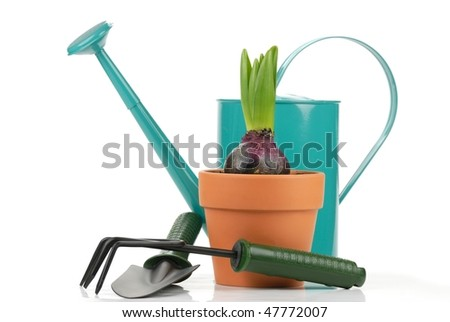Gardening tools and young hyacinth on the white. - stock photo
