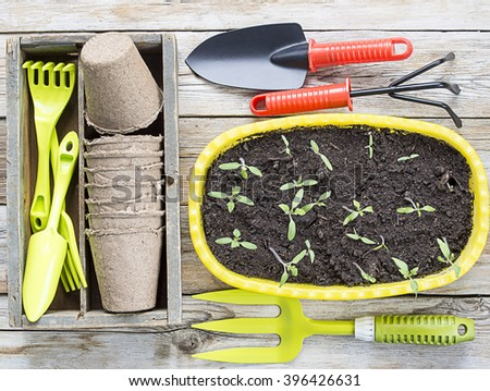 Gardening tools, cardboard pots and seedlings on a wood background - stock photo
