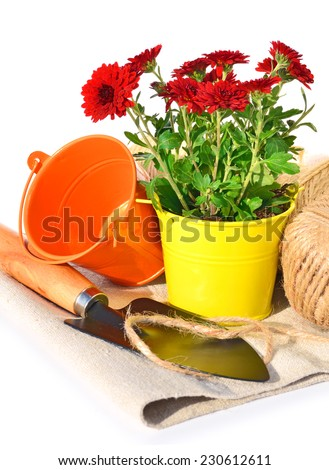 Gardening tools, flowerpot with chrysanthemums on the sacking isolated on white - stock photo