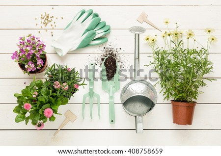 Gardening tools, flowers in pots and watering can on white wooden table. Spring in the garden concept, top view, flat lay composition. - stock photo