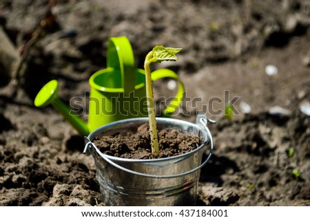Gardening tools, watering can, seeds.planting seeds.Fertilizer,Agriculture, Seeding, Plant seed growing concept, Farmer hand giving fertilizer to young plant - stock photo