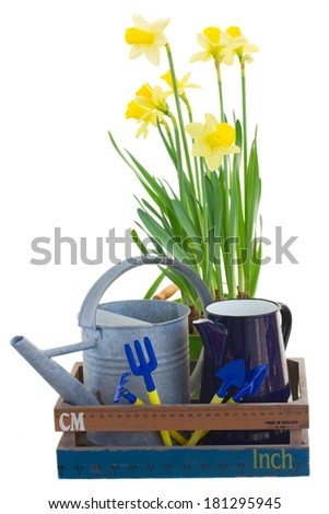 Gardening tools with daffodils isolated on white background - stock photo