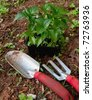 Gardening tools with plant - stock photo