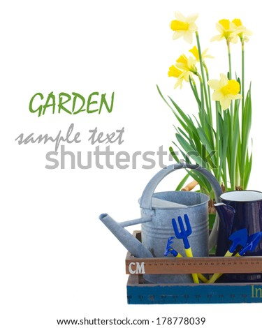 Gardening tools with yellow daffodils isolated on white background - stock photo