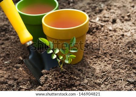Gardening trowel and plants - stock photo