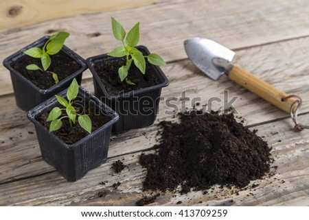 Gardening trowel with plants and compost - stock photo