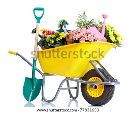 Gardening. Wheelbarrow with flowers. Isolated over white background - stock photo