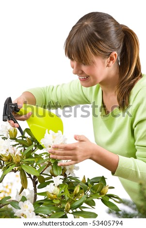 Gardening - woman sprinkling water on Rhododendron blossom flower on white background - stock photo