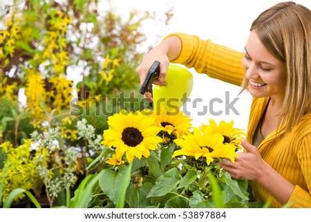 Gardening - woman sprinkling water to sunflowers on white background - stock photo