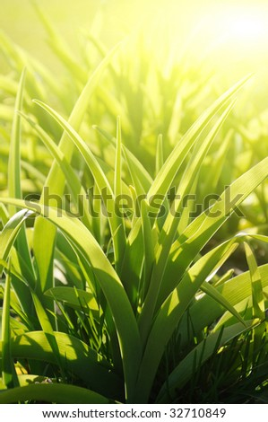 Gardens grass, sunny morning (shallow dof) - stock photo