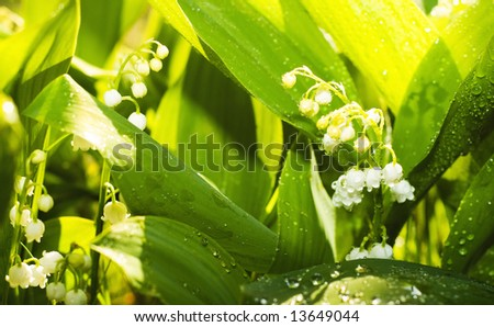 Gardens grass with the lilies of the valley, after the rain (shallow dof) - stock photo