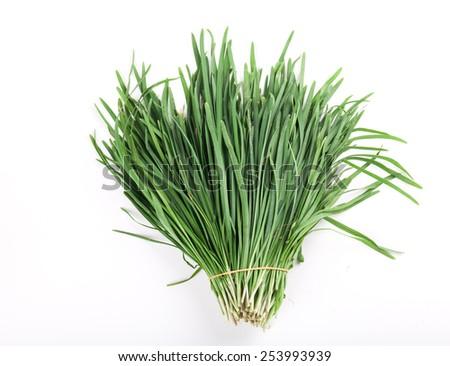 Garlic chives - stock photo