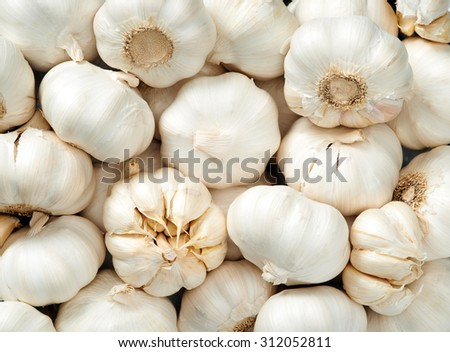 Garlic head Raw fruit and vegetable backgrounds overhead perspective, part of a set collection of healthy organic fresh produce