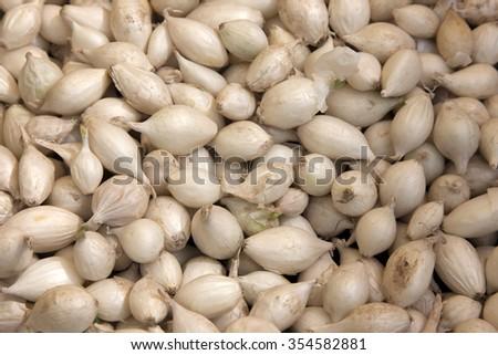 garlic on the market - stock photo
