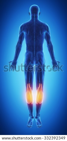 gastrocnemius - blue muscular map - stock photo