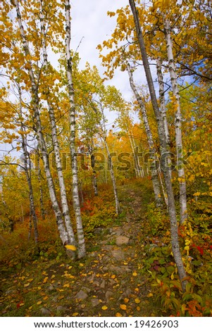 Gateway to an October trail marked with aspen and birch in the North Woods of Minnesota.
