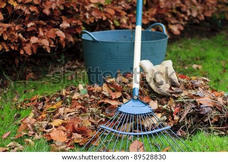 Gathering Autumn leaves - landscape - stock photo