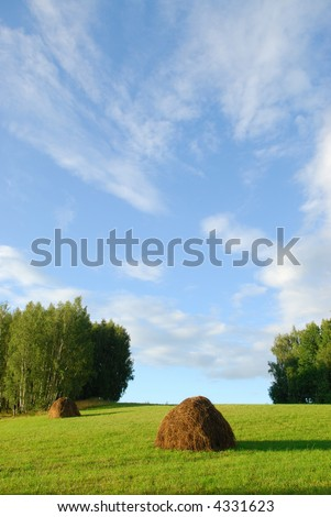 Gathering of hay - stock photo