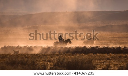 Gaucho with a herd of sheep in Patagonia - stock photo