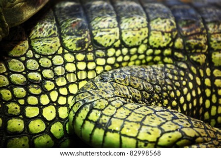 gavial crocodile close up - stock photo