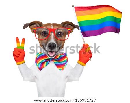 gay pride dog waving a rainbow flag - stock photo