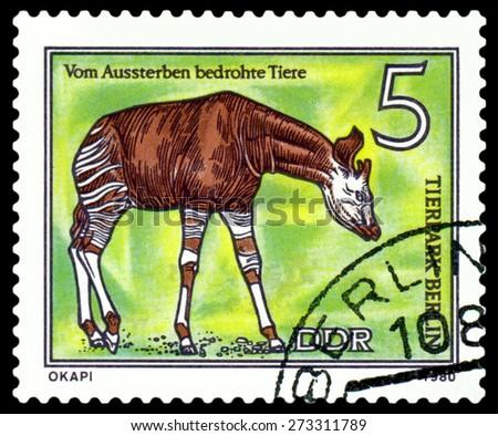 GDR - CIRCA 1980: A stamp printed in  GDR,  shows Okapi, series  Tier park, Berlin, circa 1980 - stock photo