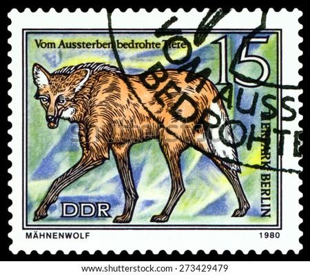 GDR - CIRCA 1980: A stamp printed in  GDR,  shows Prairie wolf, series  Tier park, Berlin, circa 1980 - stock photo