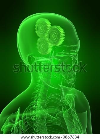 gears in a head - stock photo