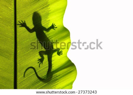Gecko backlight silhouette in a green leaf - stock photo