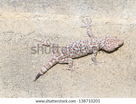Gecko cling to the wall. - stock photo