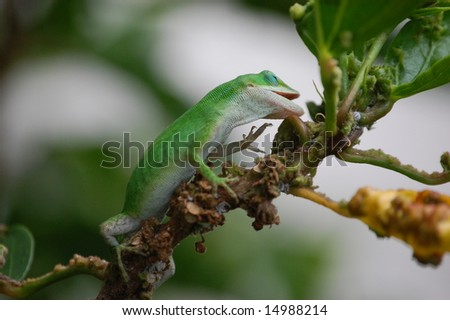 Gecko on a Branch - stock photo